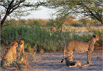 Discover the wonders of the Kalahari