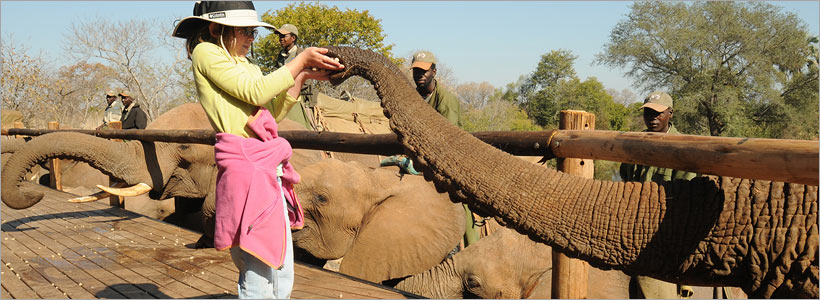 Elephant interaction at Kruger Park